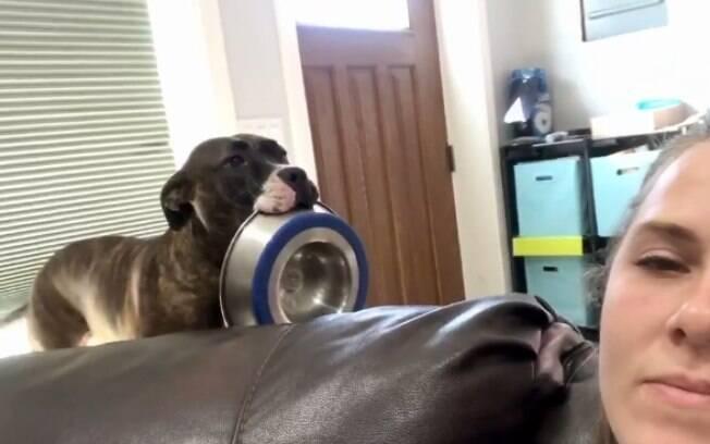 Cadela faz verdadeira performance para mostrar que está com fome