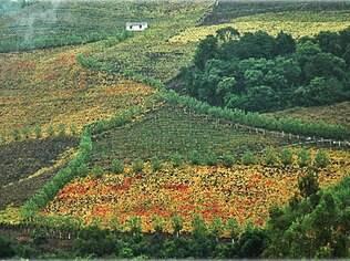 O Vale dos Vinhedos, em Bento Gonçalves, é uma iniciativa que reúne um roteiro com a opção de conhecer mais de 30 vinícolas da região