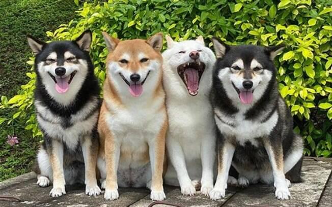 Hina, o cãozinho de pelo branco, sempre aparece em uma pose diferentes dos irmãos nas fotos em família