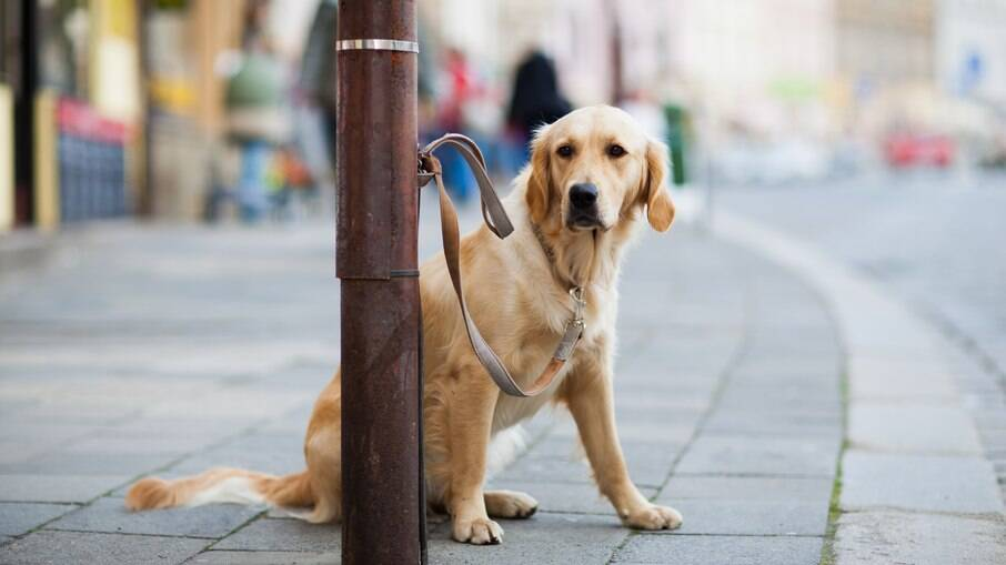 Jamais deixe seu cachorro sozinho do lado de fora de estabelecimentos. Um pequeno lapso de atenção e seu canino pode ser furtado