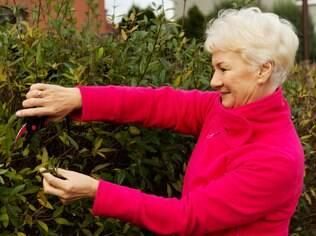 Cuidar das plantas: satisfação pode ser a mesma de fazer uma viagem ao exterior