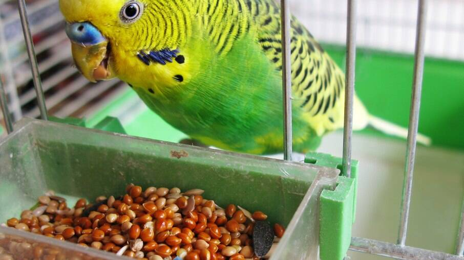 Alimentos unicamente a base de sementes não possuem os nutrientes necessários