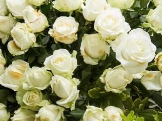 Rosa branca inspira casamento e amor