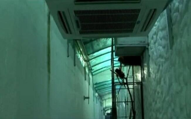 Zoológico instalou aquecedores nos corredores internos do local para ajudar os bichos a superarem o frio
