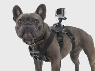 Acessório da marca Go Pro permite acoplar uma câmera com segurança às costas ou ao peito de um cão