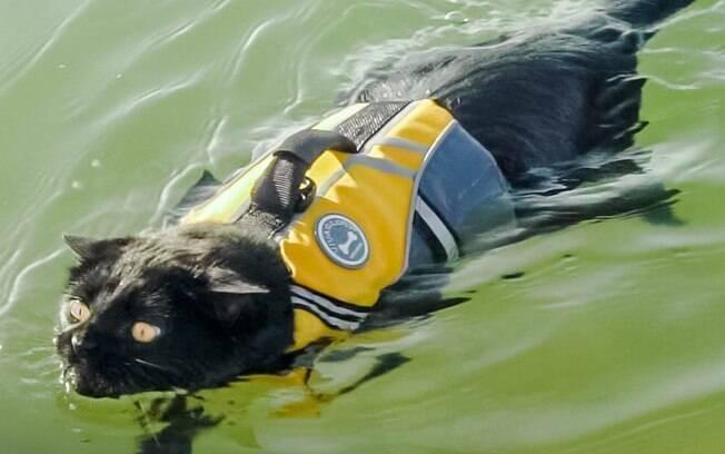 Gatinho Simon descobriu nas viagens que adora nadar