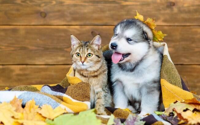 Proteja seu bichano! Tome os cuidados corretos com os pets no outono