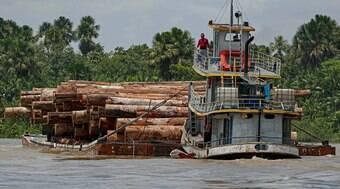 PF pede que STF barre atuação de juízes que liberaram madeira ilegal