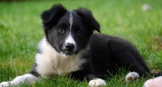 10 motivos para você adotar um cachorro