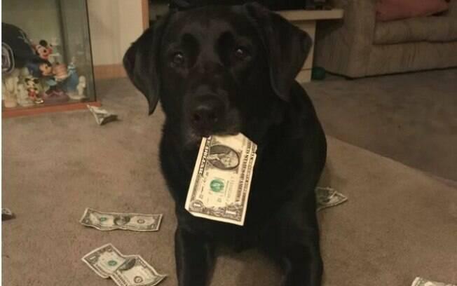 Cão esperto usa dinheiro para ganhar recompensas