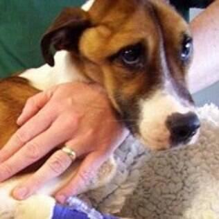A cadelinha Hope colocou em evidência a raça de cães mais abandonada na Grã-Bretanha