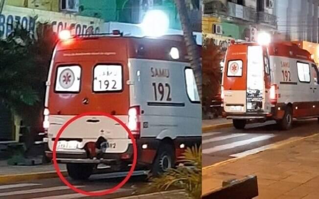cachorro traseira ambulancia