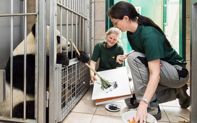 Fêmea de urso panda Yang Yang tem mais de 100 quadros e ganhará livro sobre sua vida no Vienna Schönbrunn Zoo