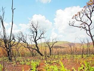 Renascimento. Vegetação consumida pelo fogo começa a brotar no Parque Estadual da Serra do Rola-Moça