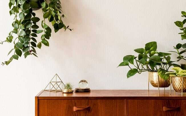 Saiba quais são as plantas mais fáceis de cultivar em casa