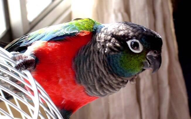 Florzinha, a papagaia que adora ir à feira comer frutas