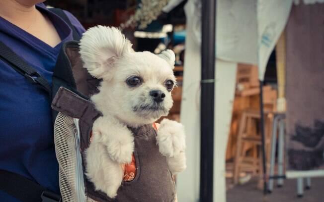 O tratamento humanizado provoca muito problemas comportamentais e de saúde no animal