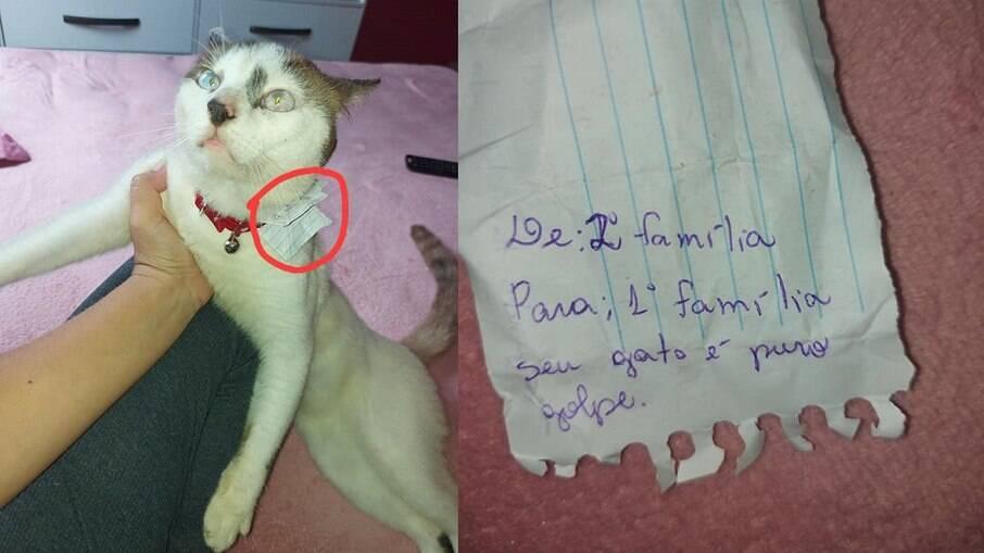Gato ganha coleira e tem seu golpe de dupla família desmascarado