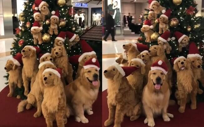 Você consegue encontrar o cachorro de verdade?