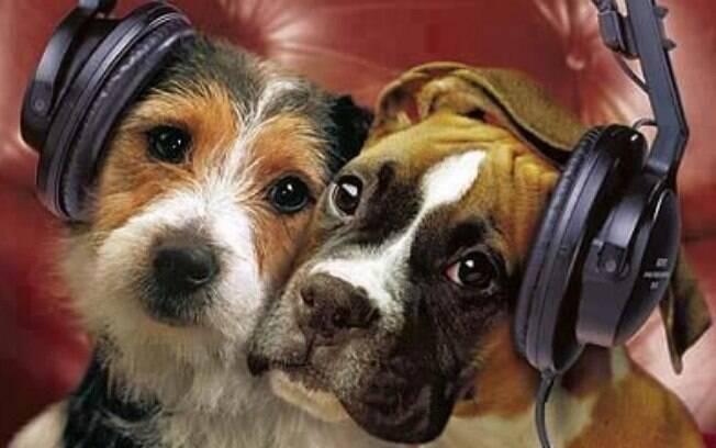 Música para cachorros tem de ser leve e tranquila, segundo estudo