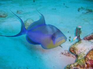 Grande Barreira de Corais oferece alguns dos melhores pontos de mergulho do mundo