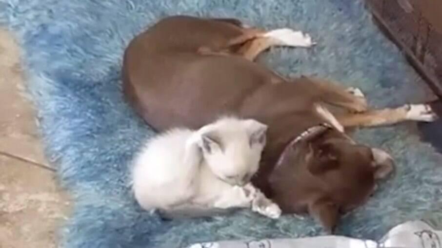 O pequeno Trippy e seu irmão canino, Gizmo