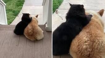 Gatinho e cachorro vizinhos são melhores amigos e encantam