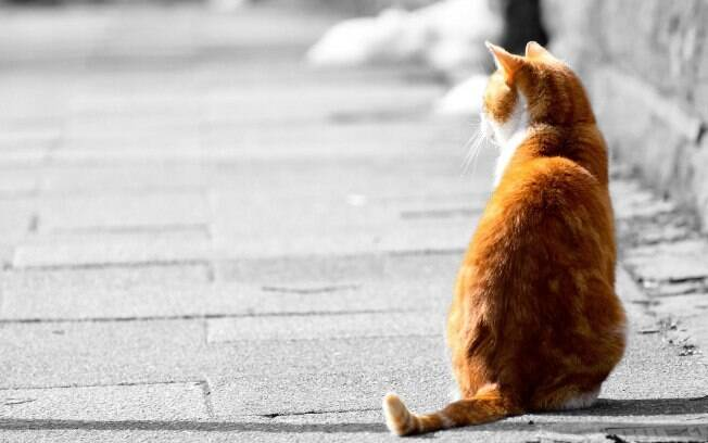 Por serem animais mais independentes e que saem sozinhos na rua, os gatos recebem o vermífugo mais vezes