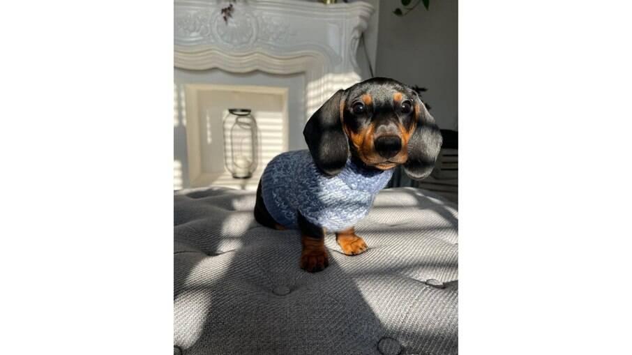 Cachorro com roupinha feita por Tom Daley