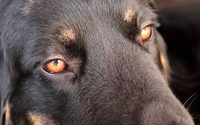 Falso veterinário matava cães e divulgava tudo nas redes sociais
