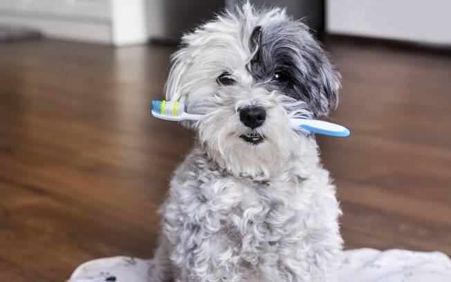 Hoje já existem diversos métodos para manter a limpeza dos dentes do pet em dia, sendo a escovagem uma delas