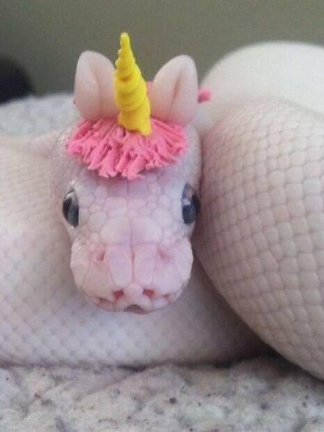 Essas cobras fofinha irão derreter seu coração e mudar sua concepção sobre elas