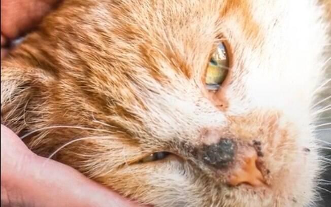 O gatinho que claramente amava companhia conseguiu um lar cheio de afeto graças aos turistas