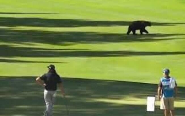 Urso atravessa o campo