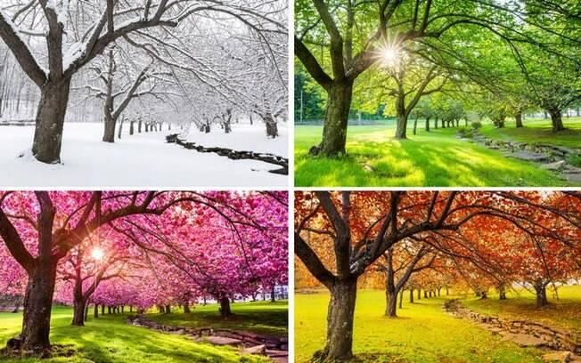 Veja a relação dos signos com as estações do ano