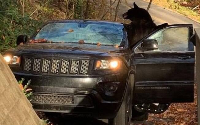 Urso em carro