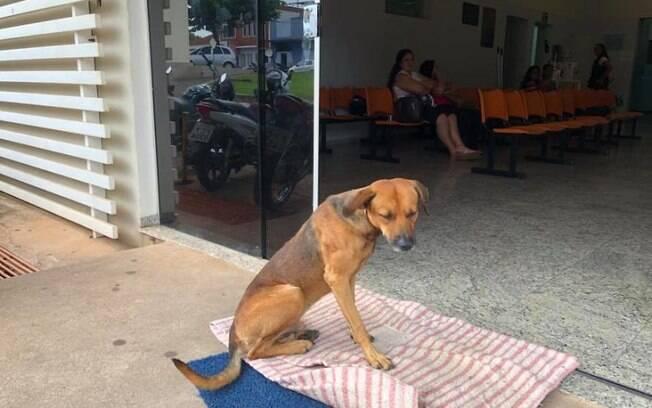 Cão espera por quatro meses dono já falecido em frente de hospital