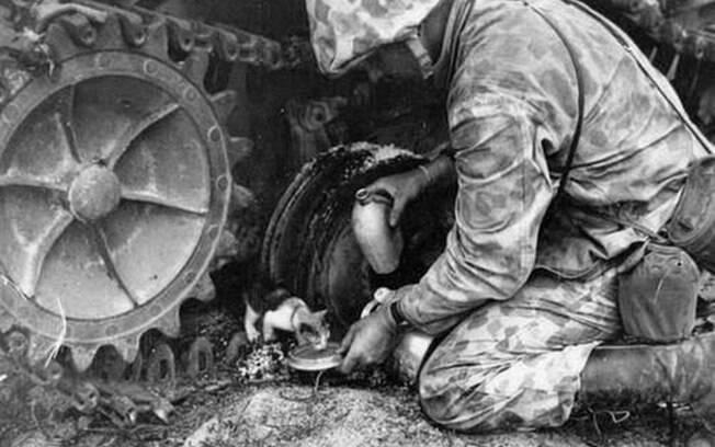 Um soldado colocando um pouco d'água pra um gatinho durante guerra.