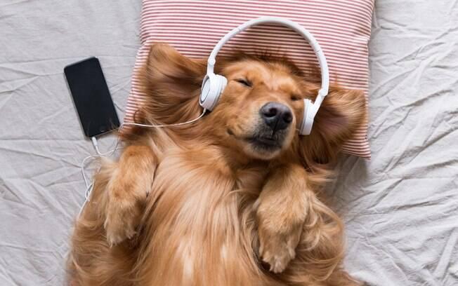 Spotify disponibiliza playlists para animais de estimação