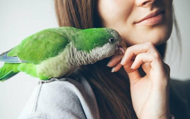 É possível melhorar o comportamento de um papagaio gritando?