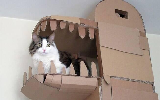 Tutor constrói castelo pra gato