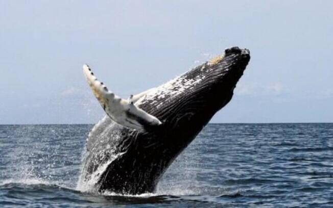 Os maiores animais do mundo vão te surpreender