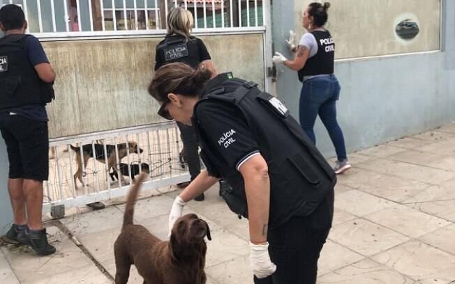 Cães foram resgatados quando dono não estava em casa