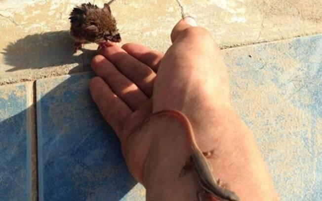 Diferentes tipos de animais estão sendo salvos pelo FrogLog