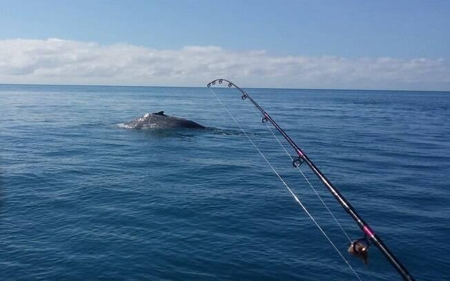 Ironicamente, grupo de pescadores havia celebrado avistamento de baleia momentos antes do acidente