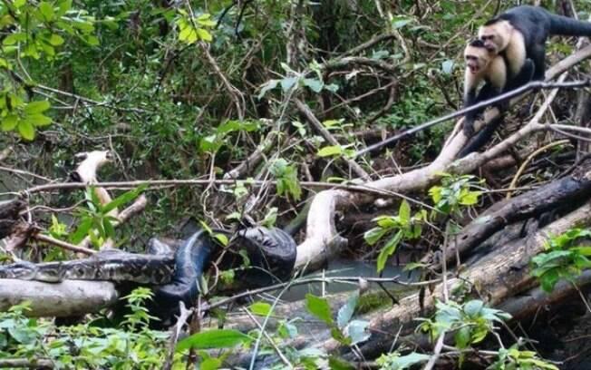 Imagens foram capturadas por pesquisadores durante expedição na selva da Costa Rica