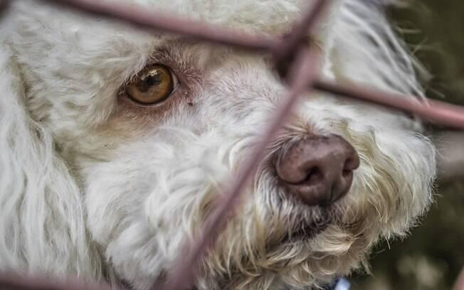 o abandono de animais é crime