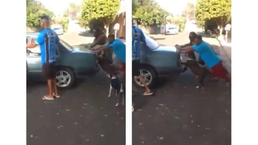 Cãozinho ajuda a empurrar carro quebrado na rua, confira o vídeo