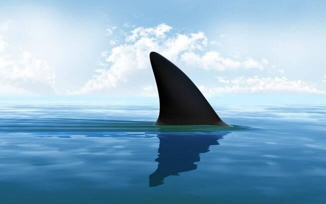 Inteligência Artificial para salvar vidas: 31% dos últimos ataques mundiais de tubarão aconteceram na Austrália