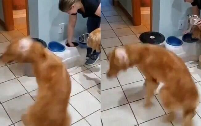 Cachorro gira todo animado esperando por comida